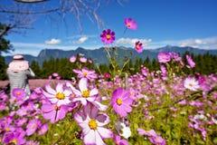 Красивое поле цветков в Тайване Стоковые Изображения RF