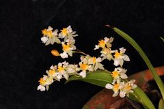 Красивое расположение белого цветка орхидеи стоковое фото