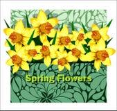Красивое расположение daffodils в конверте Стоковые Фотографии RF