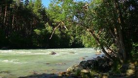 Красивое река бежать в древесинах, горах, утесах в воде акции видеоматериалы