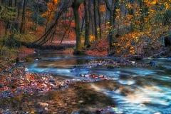 Красивое река в лесе Стоковое фото RF