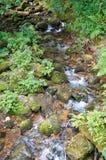 Красивое река горы бежать вниз с скалистой кровати в лесе  Стоковые Изображения RF