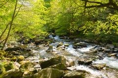 Красивое река Девона на утесах около Lynmouth Девона Стоковое Фото