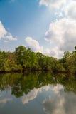 Красивое река стоковое фото
