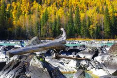 Красивое река kanas Стоковые Фото