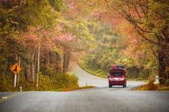 Красивое романтичного перемещения весеннего времени осени дороги популярного туристское на Ang Khang Doi, Чиангмае, Таиланде Стоковое фото RF
