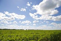 Красивое свежее зеленое поле и солнечное небо Стоковая Фотография