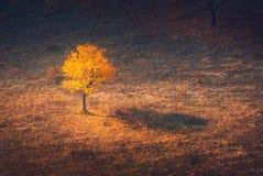 Красивое сиротливое желтое дерево Стоковое Фото