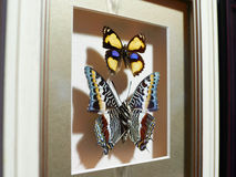 Красивое собрание бабочек Стоковое Изображение RF