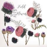 Красивое собрание поля цветет в стиле нарисованном акварелью Стоковое Фото