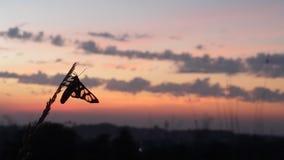 Красивое Солнце идет вниз с съемки Стоковые Фотографии RF