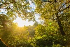 Красивое солнце утра излучает в влияниях настоящего момента леса осени художнических Стоковое Изображение RF