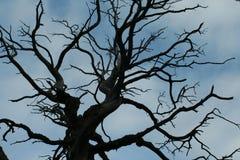 Красивое старое дерево, живая природа севера Стоковая Фотография RF
