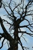 Красивое старое дерево, живая природа северная Стоковые Фотографии RF