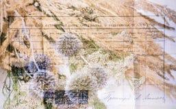Красивое старое письмо украшенное с цветками Стоковое фото RF