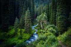 Красивое сценарное леса горы Стоковые Изображения RF