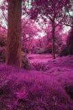 Красивое сюрреалистическое дублирование покрасило ландшафт леса Стоковое Фото