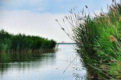 Красивое тихое река Стоковое Изображение