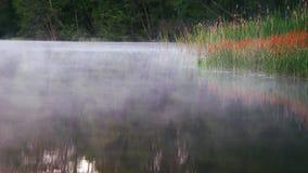 Красивое туманное озеро в Финляндии акции видеоматериалы