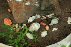 Красивое украшение земли вокруг дерева с раковинами моря Стоковое Изображение RF