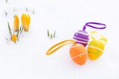 Красивое украшение пасхального яйца с желтым крокусом отпочковывается на свежей Стоковое Изображение