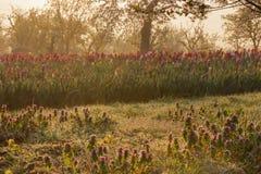 Красивое утро весеннего времени Стоковое фото RF