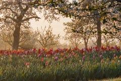 Красивое утро весеннего времени Стоковая Фотография RF