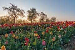 Красивое утро весеннего времени Стоковые Фото