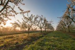 Красивое утро весеннего времени Стоковая Фотография