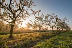 Красивое утро весеннего времени Стоковые Изображения RF