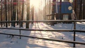 Красивое утро зимы в восходе солнца соснового леса красивом в северном ландшафте Snowy леса страны чудес Снег падая на заход солн акции видеоматериалы