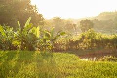 Красивое утро от Durensewu стоковая фотография