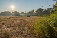 Красивое утро Солнце излучает поле фермеров голубого неба Стоковые Фото