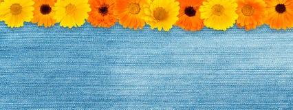 Красивое флористическое винтажное широкоформатное знамя сети Стоковые Фото