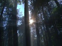 Красивое фото естественного ландшафта с лучами яркого солнца светя через ветви деревьев в лесе Стоковые Изображения RF