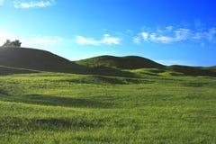 Красивое фото специфического лета Поля и вегетация в летнем времени Красивая концепция предпосылки стоковое изображение