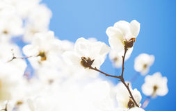Красивое цветене цветков весной Стоковые Фотографии RF