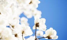 Красивое цветене цветков весной Стоковые Изображения RF