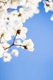 Красивое цветене цветков весной Стоковая Фотография