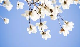Красивое цветене цветков весной Стоковое Изображение