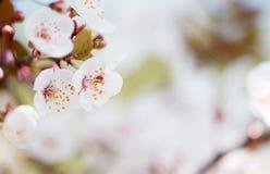 Красивое цветене цветков весной Стоковые Изображения