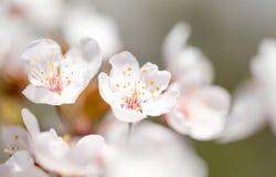 Красивое цветене цветков весной Стоковая Фотография RF