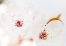 Красивое цветене цветков весной Стоковое фото RF