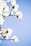 Красивое цветене цветков весной Стоковое Изображение RF