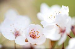 Красивое цветене цветков весной Стоковые Фото