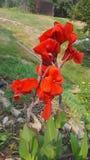 Красивое цветене стоковые фото