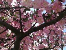 Красивое цветене стоковое изображение