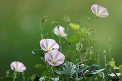 Красивое цветение весны цветков Стоковое Фото