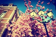 Красивое цветение вишневого дерева Стоковые Фотографии RF