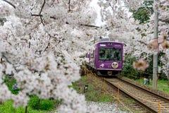 Красивое цветение поезда и хереса Стоковые Фотографии RF
